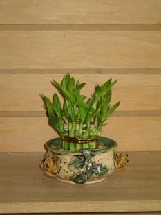 bamboo14