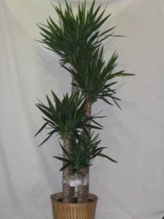 plant40
