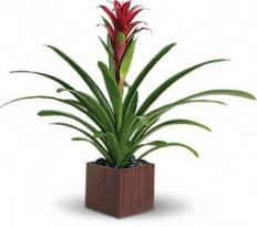 plant45