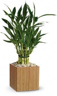plant46