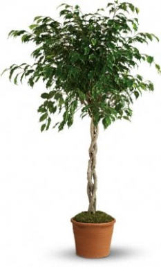 plant47