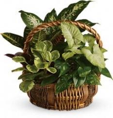 plant49