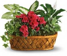 plant51