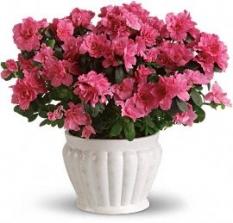 plant53