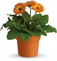 plant56