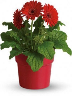 plant58